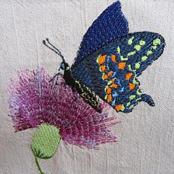 Thistle Butterfly 5X7